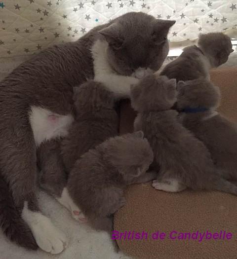 Etchika et ses bébés