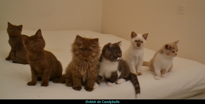 6  chatons sur 7