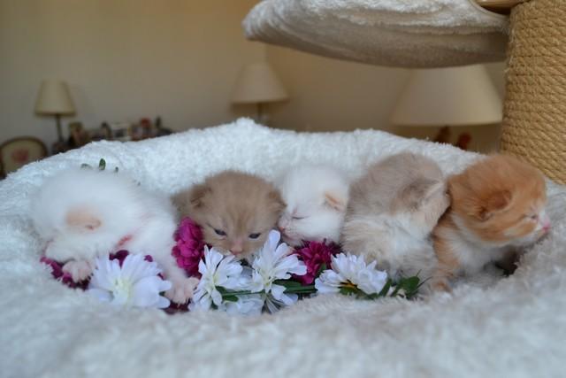 bébés guapa